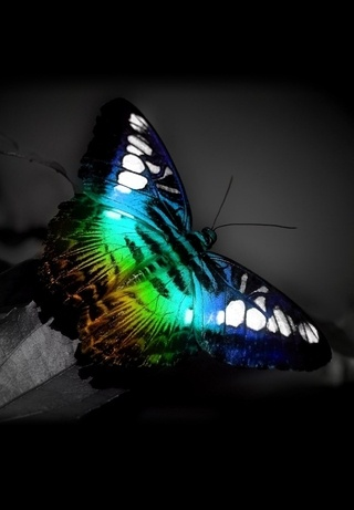 Butterfly, Truly Amazing Colors Look Like Priceless Work of Art !!