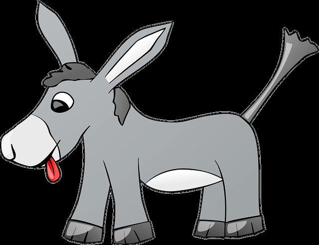 Słoń - gej, zakochane osły i PiS