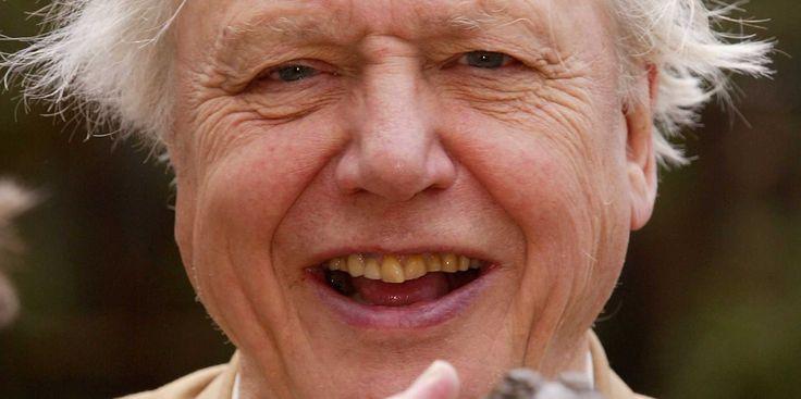 David Attenborough create wild new vr TV show exploring the origins of life. http://www.businessinsider.com/david-attenborough-virtual-reality-documentary-origins-of-life-launch-june-2015-6?utm_content=bufferb8092&utm_medium=social&utm_source=pinterest.com&utm_campaign=buffer  #vr   #nature