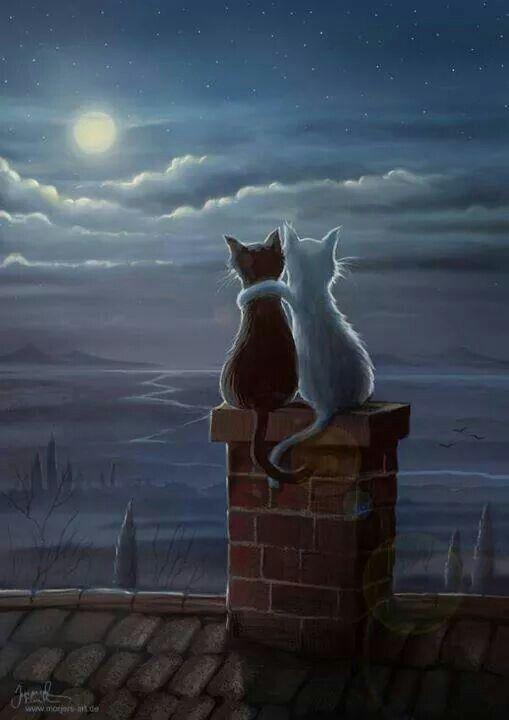 gatos románticos. Ojala esos fueran Ladybug y CatNoir