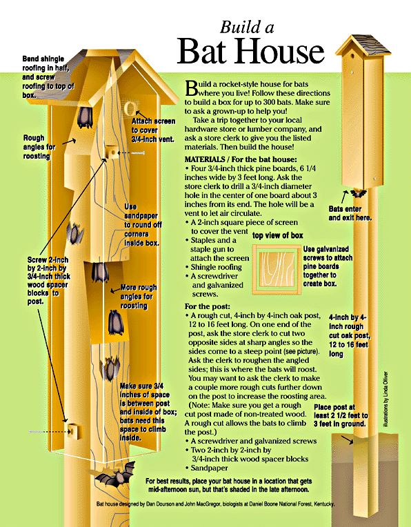 Hope my sis and I can build this. I would love to attract bats to my neighbourhood. Bats do us a great service by eating a HUGE amount of flying insects (including MOSQUITOES) and consequently help to control some dangerous and harmful pests.