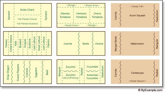 Companion planting layout.