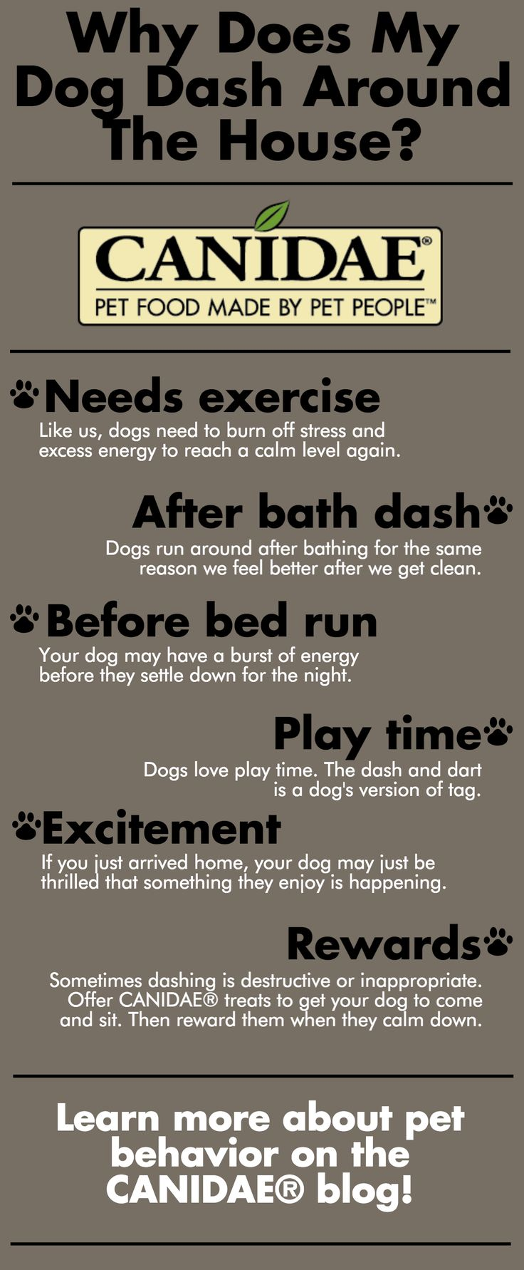 Why Does My Dog Dash Around The House? | CANIDAE® Blog