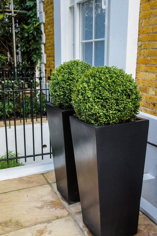 Tall planters with sculpted box woods yard and patio for Garden planters