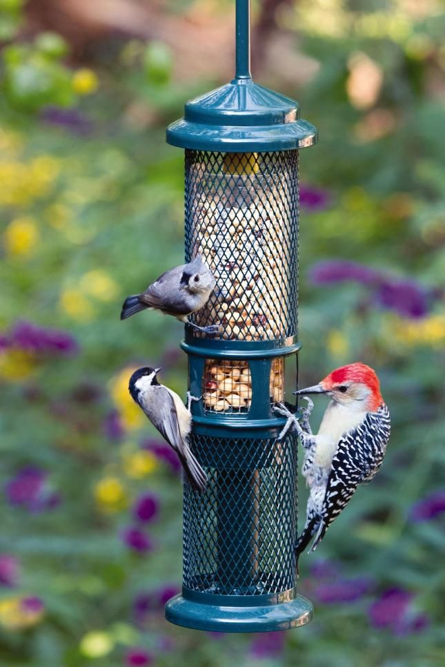 Wild Birds Unlimited | Squirrel Resistant Feeders | Barrie, ON