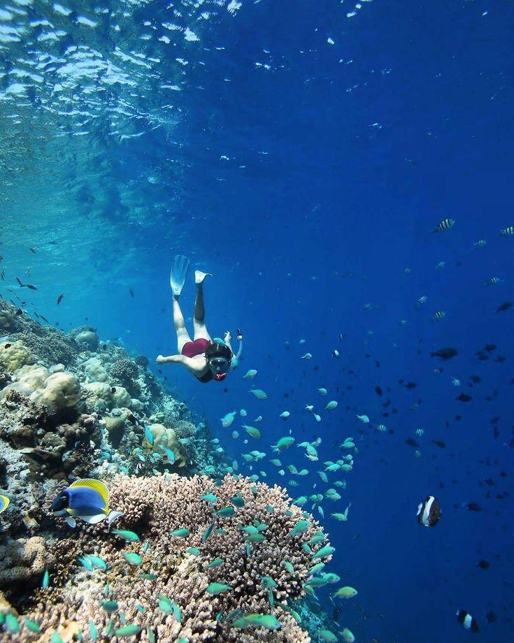 Beautiful Places Underwater: Best 25+ Maldives Underwater Hotel Ideas On Pinterest