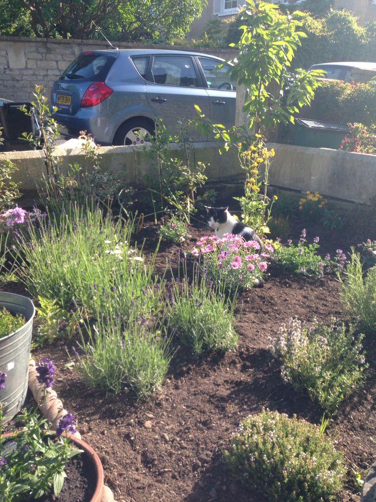 Crouching tiger hidden Alfie (front garden edition)
