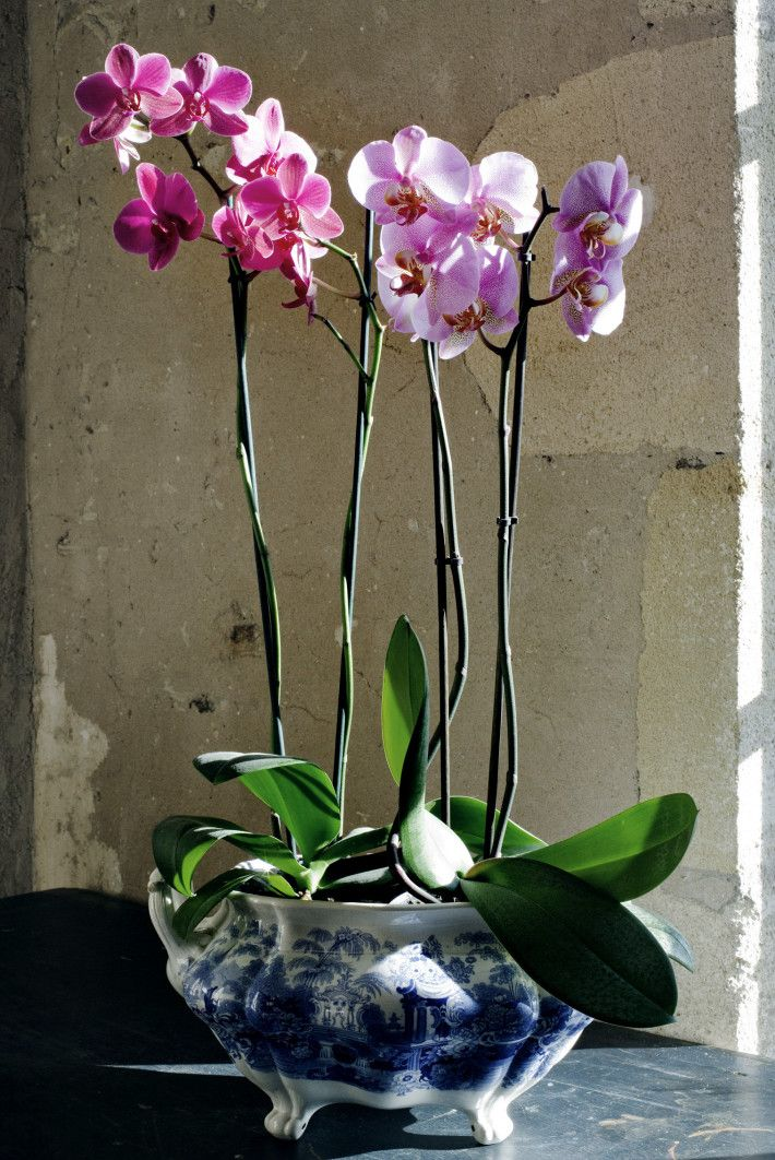 orchids in blue patterned pots