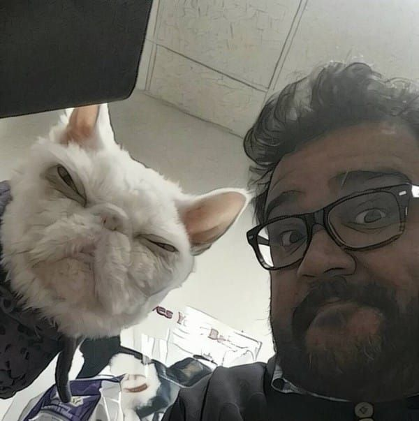 Rescuers Find Cat 'Dragging A Carpet,' Then Shave Off 5 Pounds Of Fur And He Totally Transforms