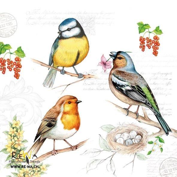 Servietten SPRING MELODY rundMagnolie 12 Papierservietten Vogel