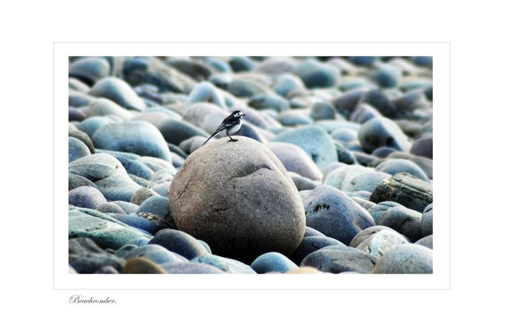 Beachcomber by Jessica Priddy on ArtClick.ie