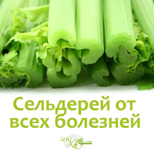 Зеленая аптека - сельдерей от всех болезней.    1. Аллергия. 2 ст. ложки измельченных корней настаивают 2 часа в 1 стакане холодной воды. Пьют по 1/3 стакана 3 раза в день за 15-20 мин. до еды.    2. Воспалительные заболевания кожи (фурункулы, гнойные раны и др.). Полстакана листьев залить до верха уксусом, добавить 1/2 ч. ложки соли. Прикладывать к воспаленным местам.    3. Гастрит. 30-40 г корня заливают 1 литром кипящей воды, настаивают 8 часов. Пьют по 2 ст. ложки 3 раза в день до eды…