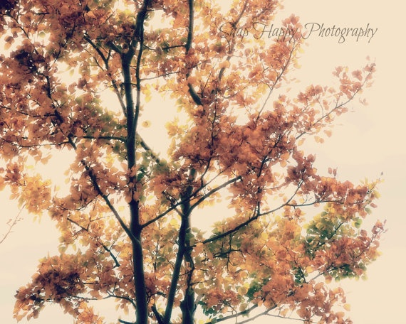 Autumn  8x10 Photo  Autumn Leaves  Autumn Tree by Snaphappy72, $15.00