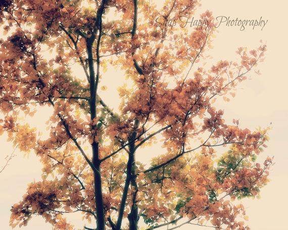 Autumn  8x10 Photo  Autumn Leaves  Autumn Tree by Snaphappy72, $15.00