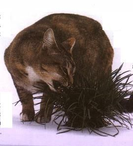GATITUDES! Como plantar pasto para su gatito
