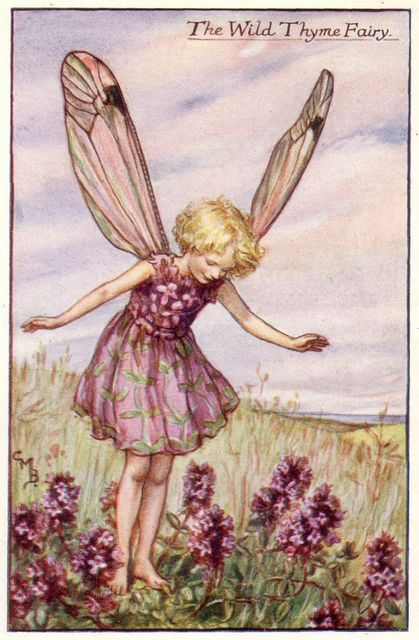 THE WILD THYME FAIRY - by Cicely Mary Barker | Flickr