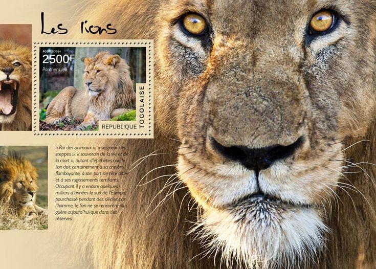 TG 14515 bLions (Panthera leo)