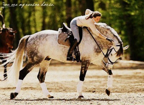 Dapple gray horses have the most beautiful coat coloring! The range of hues and variety of depth of the color is just breathtaking! This coloration is absolutely the most fascinating to me! And man does that horse look huge!