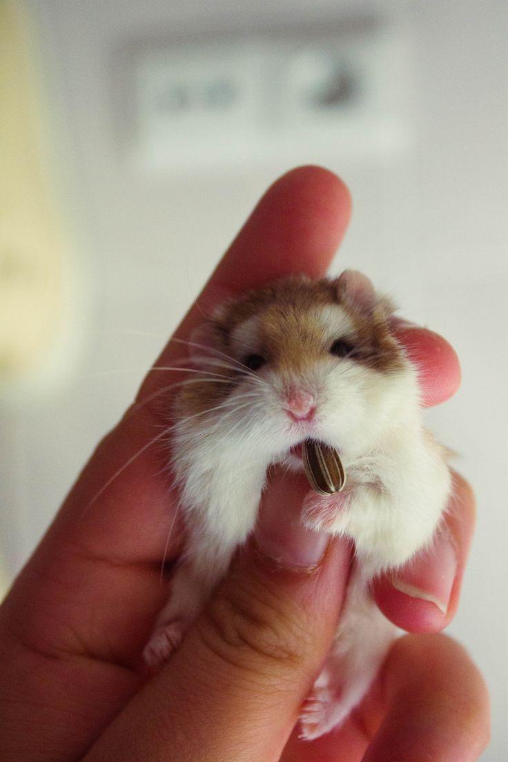 George #lovelyhamster #hamster