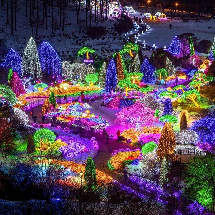 Even in winter night you still can enjoy the beautiful garden in Korea!  Once the night falls in the Garden of Morning Calm, the place boasts colorful fairy lights, emitting exotic atmosphere throughout the light festival. The garden is well harmonized with trees and lights, showcasing spectacular views of photo zone. It is the top representative courses that must not be missed!  Imagine your Korea!  #ImagineyourKorea #KPlace #VisitKorea #SouthKorea #GardenofMorningcalm