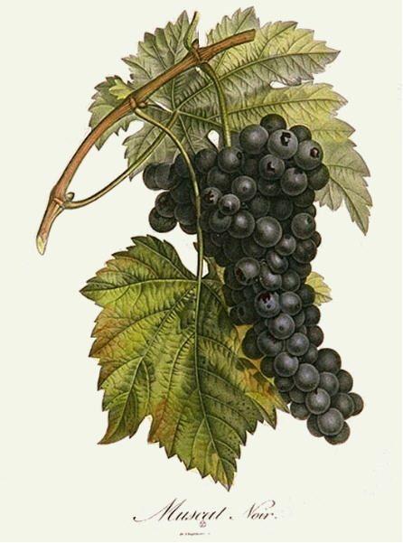 Vintage Botanical Prints - Bing Images