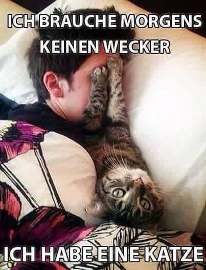 #wecker? #katze!
