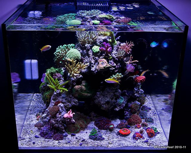 17 best images about reef tanks on pinterest tips and for Cube saltwater fish tank