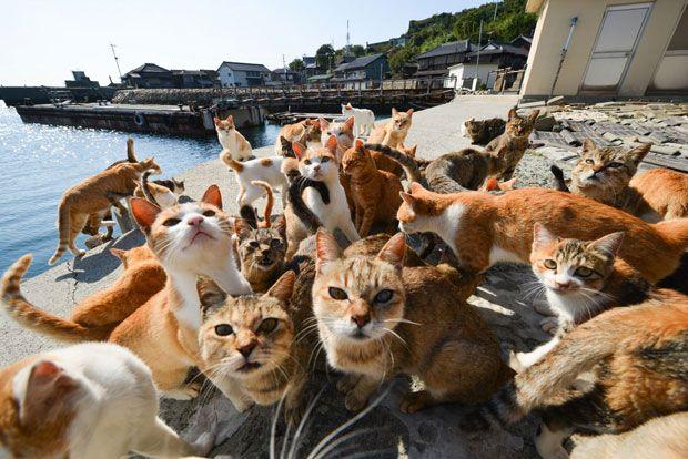 青島 Ao-island, the cat island, Ehime | Thousands Islands off Japan... | Pinterest | Cats, The o ...