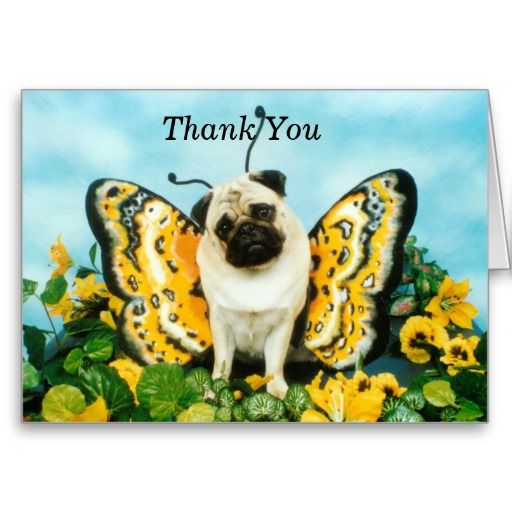 =>Sale on          	Butterfly Pug Thank You Card           	Butterfly Pug Thank You Card in each seller & make purchase online for cheap. Choose the best price and best promotion as you thing Secure Checkout you can trust Buy bestThis Deals          	Butterfly Pug Thank You Card Here a great d...Cleck Hot Deals >>> http://www.zazzle.com/butterfly_pug_thank_you_card-137044917058958261?rf=238627982471231924&zbar=1&tc=terrest