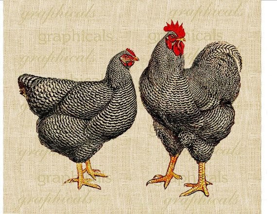 Black speckled chickens Poultry Rooster Instant by graphicals