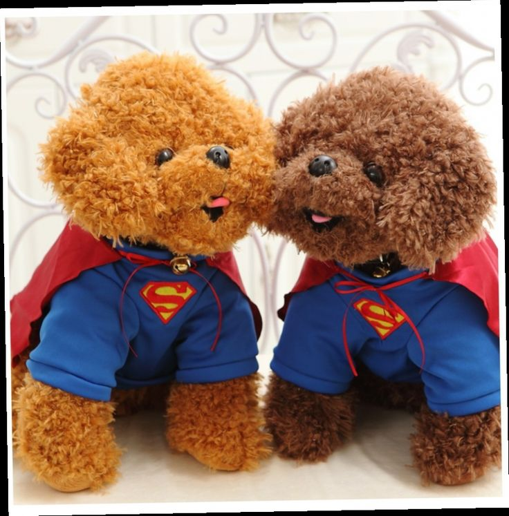 44.77$  Watch here - http://alimwz.worldwells.pw/go.php?t=32366167609 - free shipping, superman cloth teddy dog poodle dog plush toy,baby toy birthday gift d960