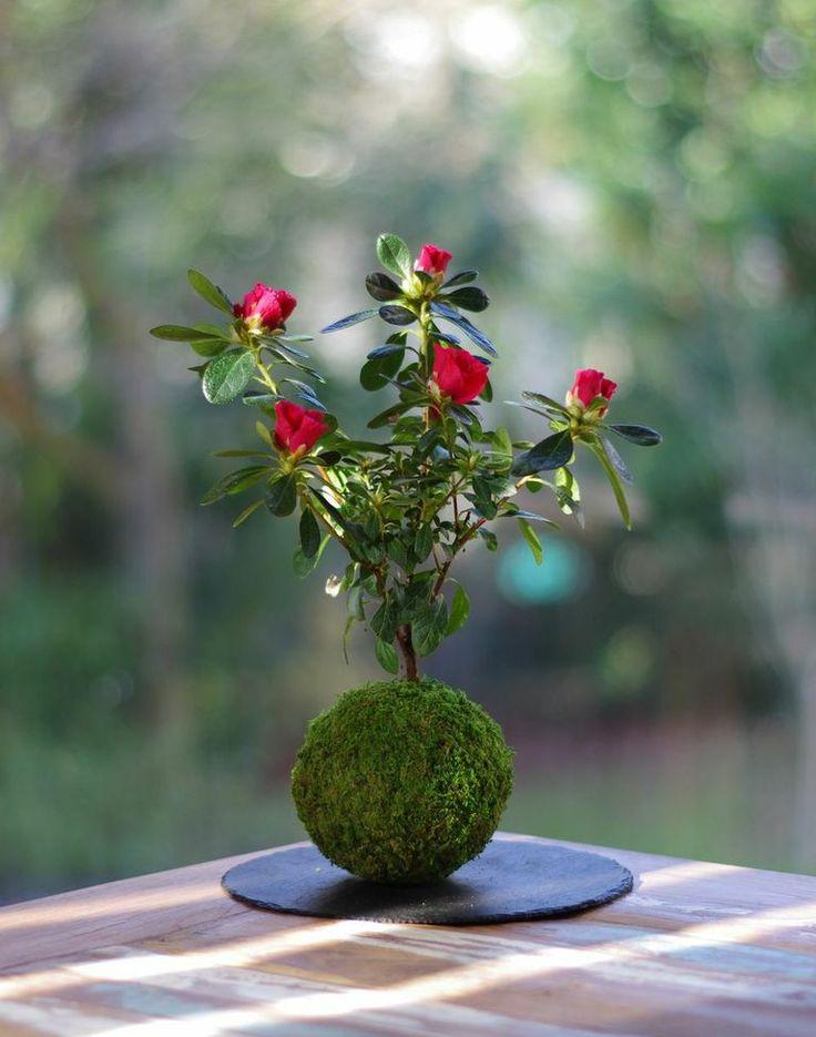Tendance printemps 2016  Art & Créations : Apparu au Japon dans les années 1990 dans les jardins, sur les balcons et dans les intérieurs, l'Art du Kokedama plaît beaucoup! Du coup, je suis ravie de vous parler de ces p...