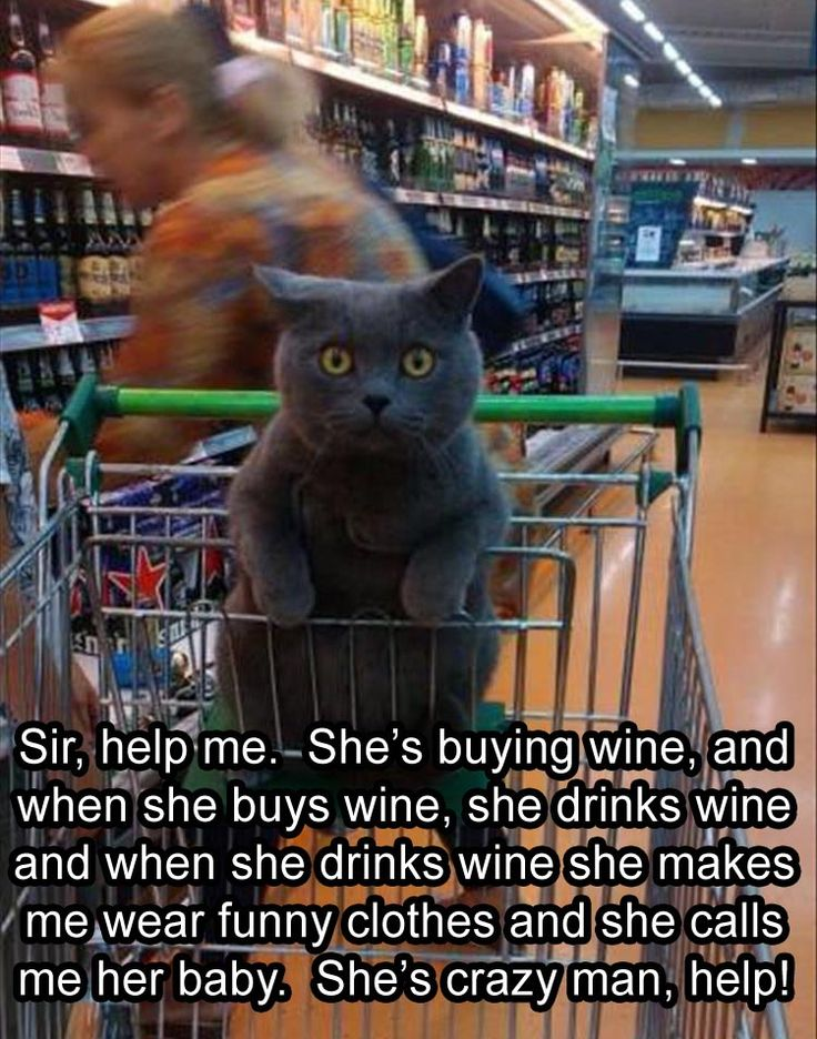help-me-shes-buying-wine-when-she-drinks-it-she-gets-crazy funny animal pictures pictures funny Animals