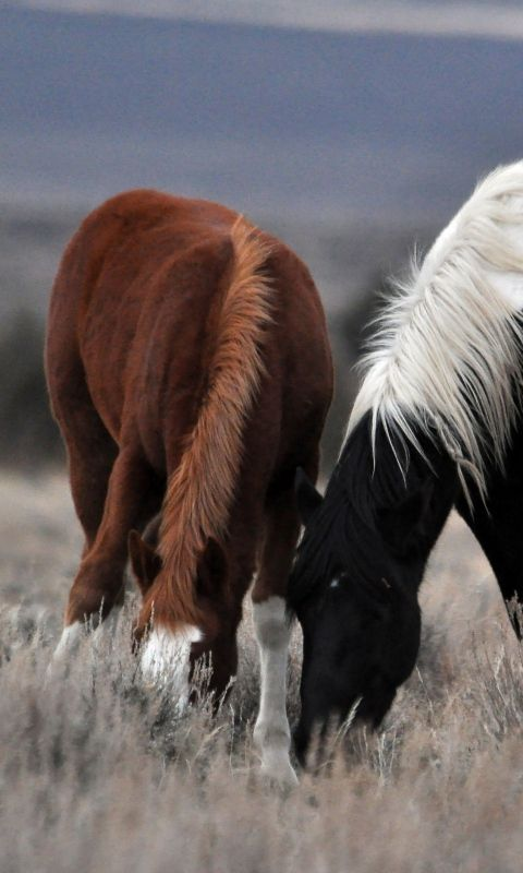 480x800 Wallpaper couple, horse, horses, mane, grass, food