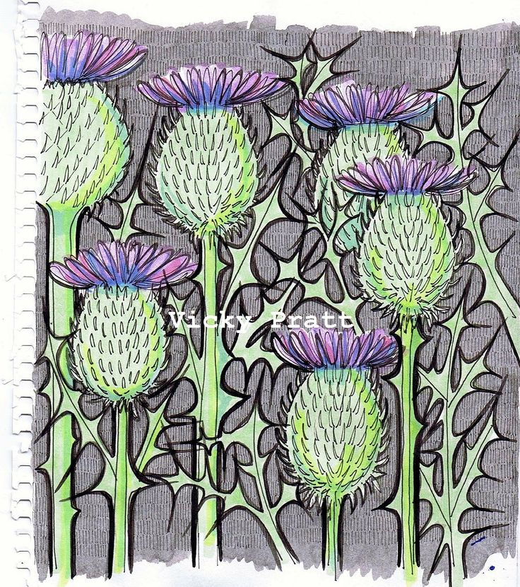 By Vicky Pratt. Copic markers and ink. Thistles. For Inktober 2015. www.vicpratt.wix.com/vickypratt Find me on FB and IG Vicky Pratt - Illustrator.