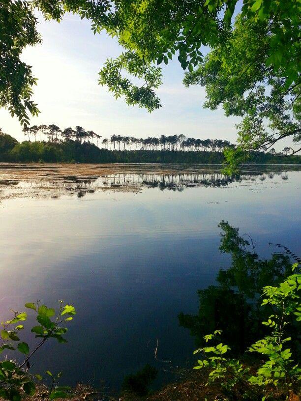 Étang d'Abbesse à Saint Paul lès Dax. #landes #saintpaullesdax #etang #pêche