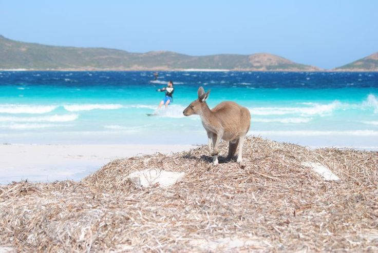 Sun, sand, and Skippy in Esperance, Western Australia.