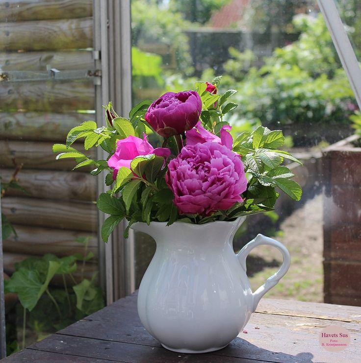 Ib Laursen - mynte - mynteporcelæn - kande - purewhite - drivhus - greenhouse - pæon - paeonia - pæoner - blomster - flowers - havets sus - havetssus