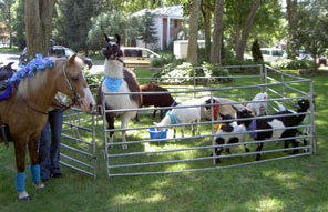 petting zoo comes to your house with horses and all!