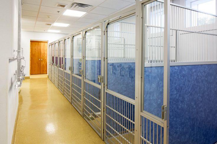 Dog boarding hospital design hospital design design