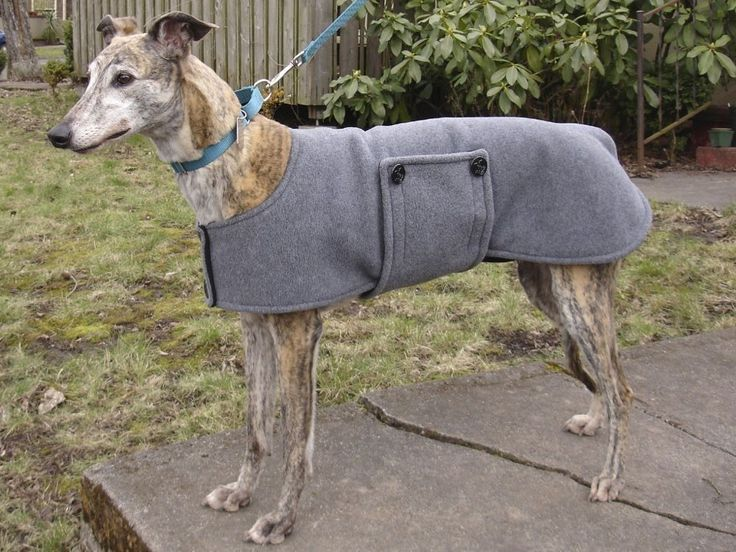 Custom Fleece Peacoat for Greyhounds and Other Big Dogs - to be custom made., via Etsy.