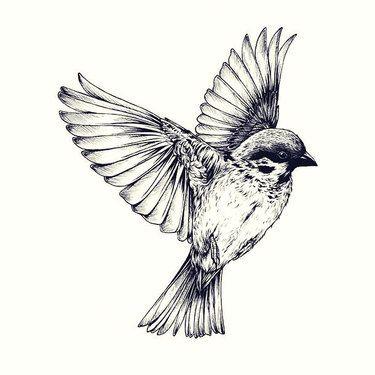 Realistic Sparrow Tattoo Design