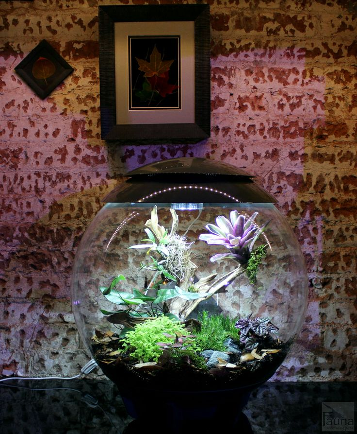 87 best images about biorb aquariam inspiration on for Snap on fish tank