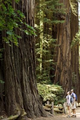 Stay in Crescent City for easy access to Redwood National Park.