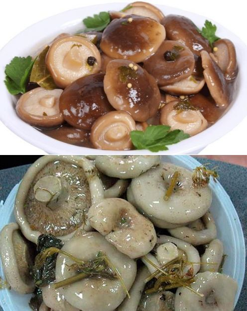 Засолка грибов холодным способом