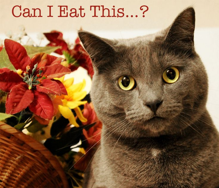 pathfinder cat sith