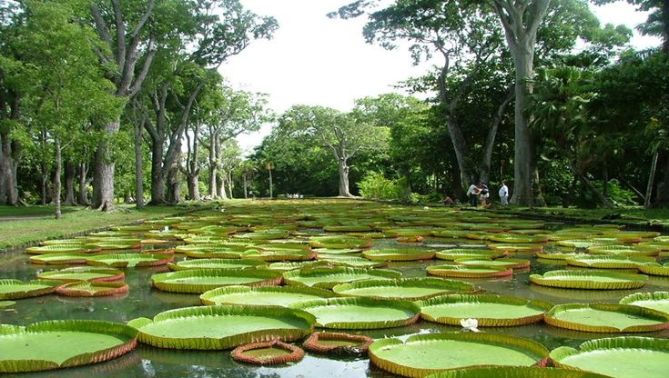The Botanical Garden of Mauritius is a wonderland of botanical splendor. The lush green house stretches over vast acres of land and homes over 650 species of plants including giant water lilies, medicinal plants, baobabs and an exceptional amount of palm trees. It is a haven and a must visit.