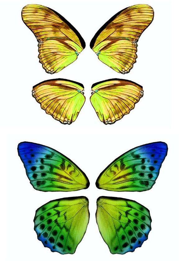 Best 25 mariposas para imprimir ideas on pinterest - Imagenes de mariposas de colores ...