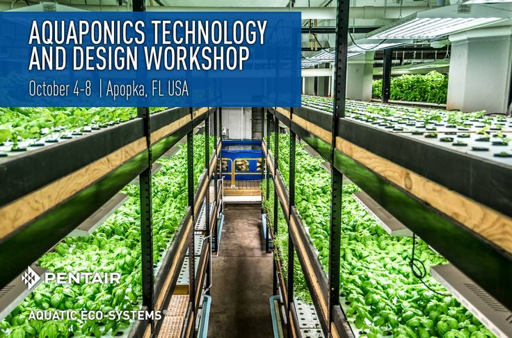 Commercial aquaponics business plan