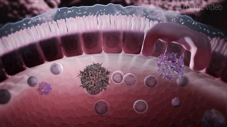 Nature Immunology - Immunology of the Gut Mucosa on Vimeo